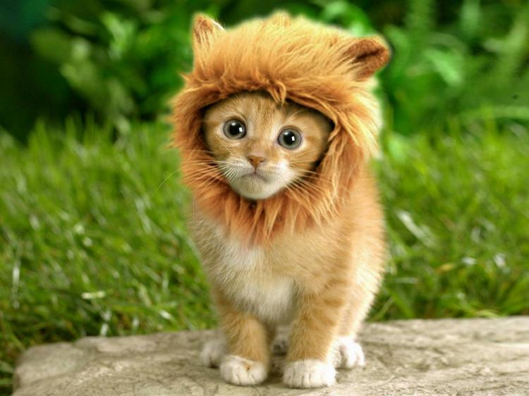 Even a cat looks like a lion.